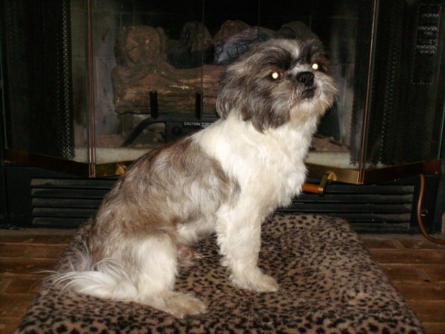 List Of Dog Breeds That Have Brindle Coloring | Dog Breeds Picture